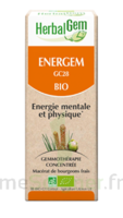 Herbalgem Energem Solution buvable bio Fl cpte-gttes/30ml à ROMORANTIN-LANTHENAY